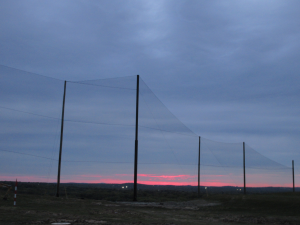 Sunset view of the completed Golf Barrier Netting Install
